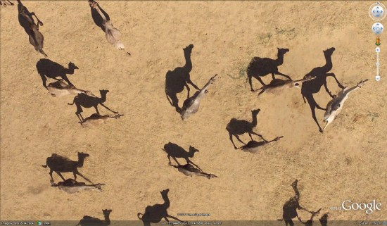 High Resolution African Animals In Google Earth Google