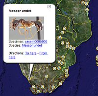 Antweb shows Ant locations in Google Earth