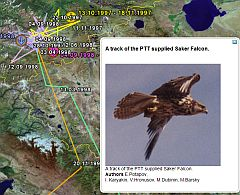 Bird Tracks Migrations in Google Earth Asia screenshot