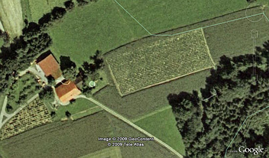 Marijuana Field in Switzerland