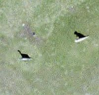 Dinosaurios en Google Earth