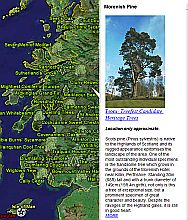Heritage Trees in Scotland  in Google Earth