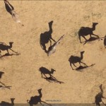 High Resolution African Animals in Google Earth