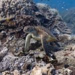 Street View goes underwater
