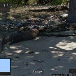 Komodo Dragons in Street View